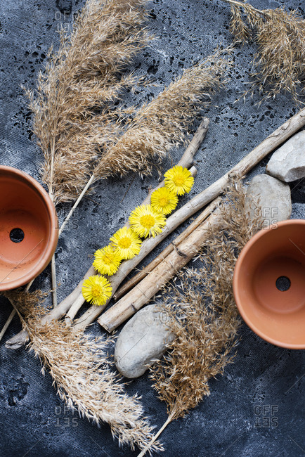 Still life of two terra-cotta pots and dandelion flower heads and harvest grass stalks