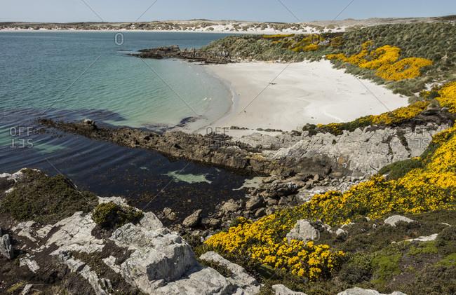 Gypsy Cove, near Stanley, Falkland Islands, South America