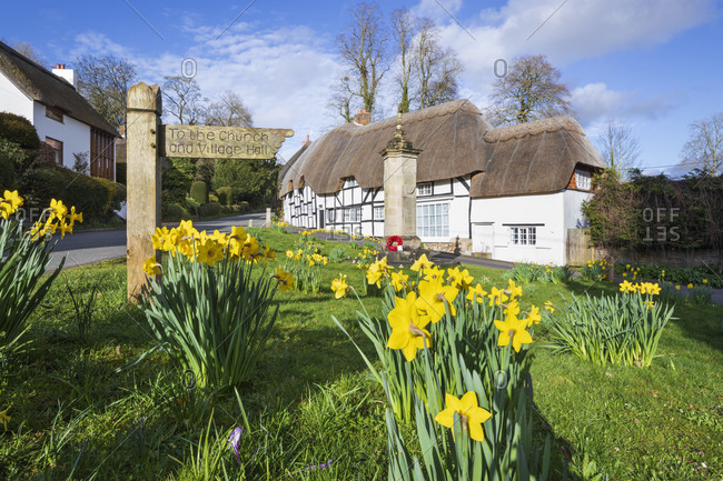 March 11, 2020: Spring Daffodils on the village green with white thatched cottages behind, Wherwell, Hampshire, England, United Kingdom, Europe