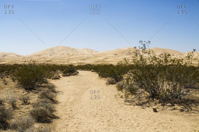 Kelso Dunes, Mojave Desert, Mojave National Preserve, California, USA