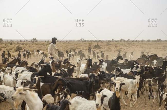April 9,  2016: Goat herding nomads of the Adrar, Mauritania