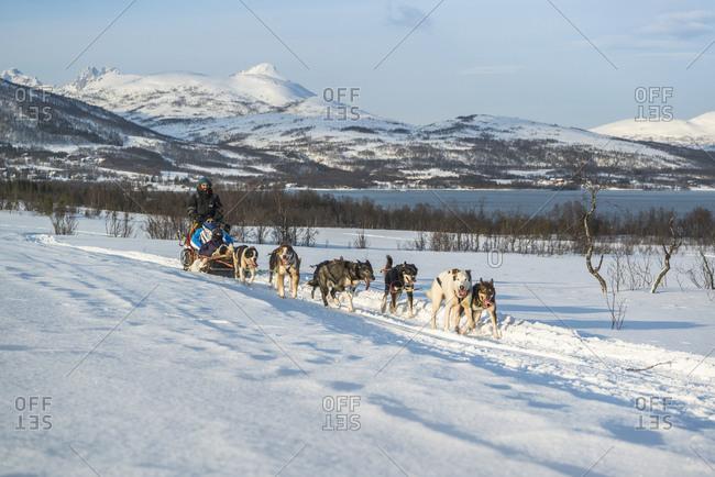 February 24,  2016: Dog sledding in Norway