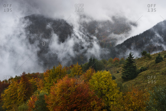 Autumn forest in Mali Fatra, Mali Fatra, Carpathians, Slovakia, Europe Autumn forest in the Mala Fatra, Carpathian Mountains, Slovakia, Europe