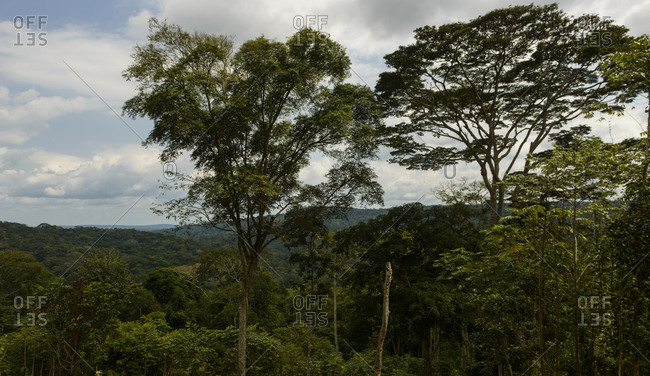 The equatorial rainforest of Gabon, central Africa