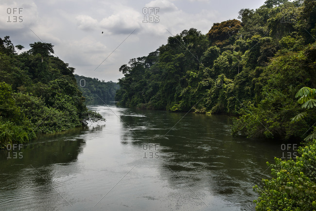 The river of equatorial rainforest, Gabon, Central Africa
