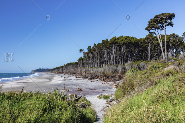 Forest by the seashore along the rugged west coast, South Island, New Zealand