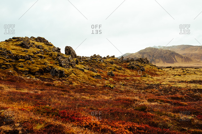 Lava rocks covered with moss, Reykjav�k, Gullbringusysla, Iceland