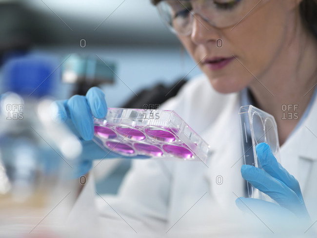 Cell Research, scientist looking at multi-well plate cell growth  in laboratory