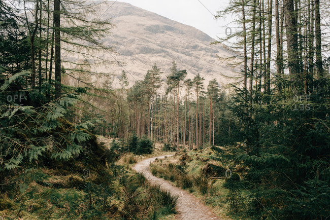 Path through forest, Trossachs National Park, Canada