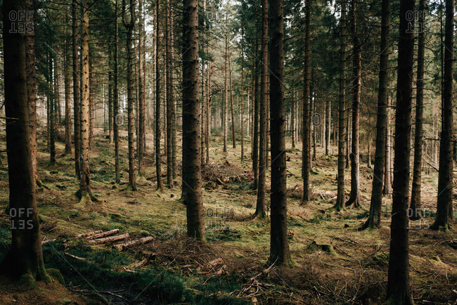 Forest, Trossachs National Park, Scotland
