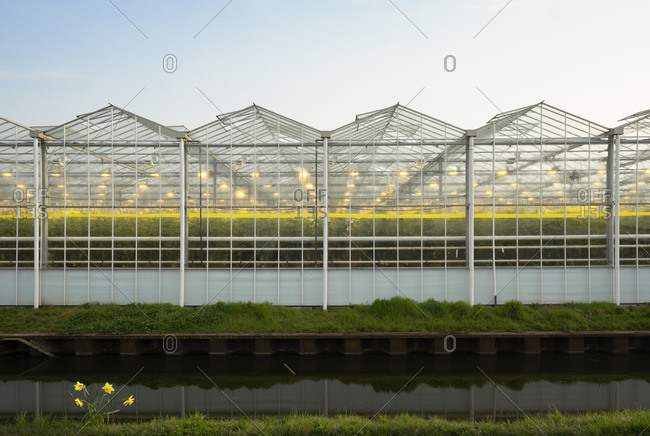 Greenhouse in the Westland area, part of Netherlands with large concentration of greenhouses, Maasdijk, Zuid-Holland, Netherlands