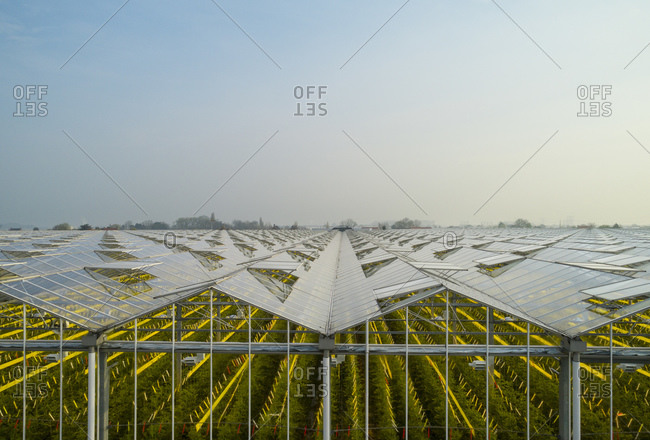Greenhouse in the Westland area, part of Netherlands with large concentration of greenhouses, elevated view, Maasdijk, Zuid-Holland, Netherlands
