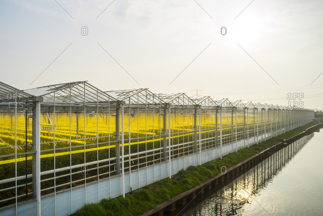 Greenhouse in the Westland area, part of Netherlands with large concentration of greenhouses, angled view, Maasdijk, Zuid-Holland, Netherlands