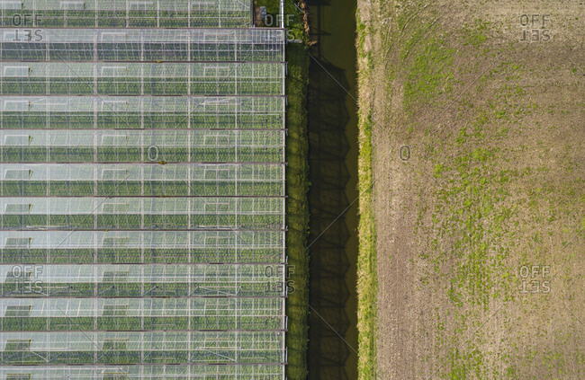 Greenhouse in the Westland area, part of Netherlands with large concentration of greenhouses, overhead view, Maasdijk, Zuid-Holland, Netherlands