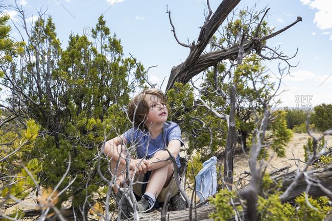 6 year old boy sitting in tree perch, Galisteo Basin, NM