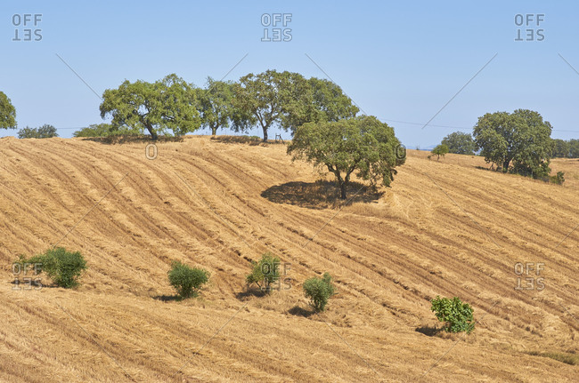 Rolling farm field in the Alentejo region, Portugal