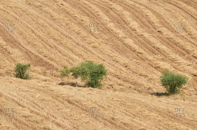 Farm field in the Alentejo region, Portugal