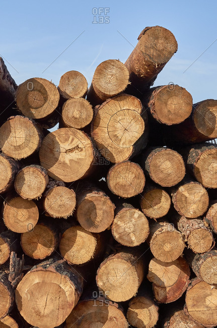 Cut logs from pine forest during deforestation in Portugal