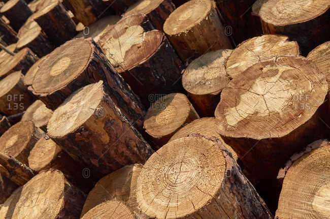 Close up of cut logs from pine forest during deforestation in Portugal