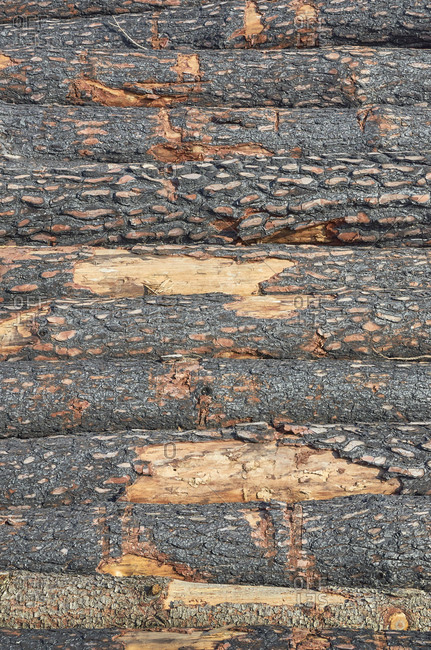 Stack of cut logs from pine forest during deforestation in Portugal