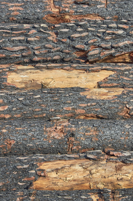 Pile of cut logs from pine forest during deforestation in Portugal