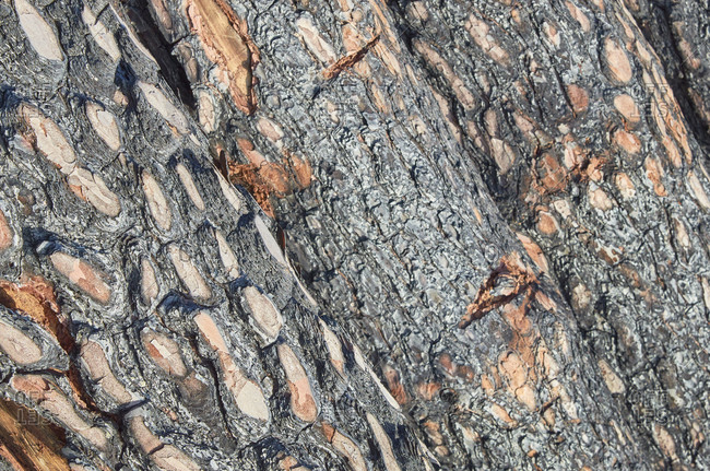 Close up of a pile of cut logs from pine forest during deforestation in Portugal
