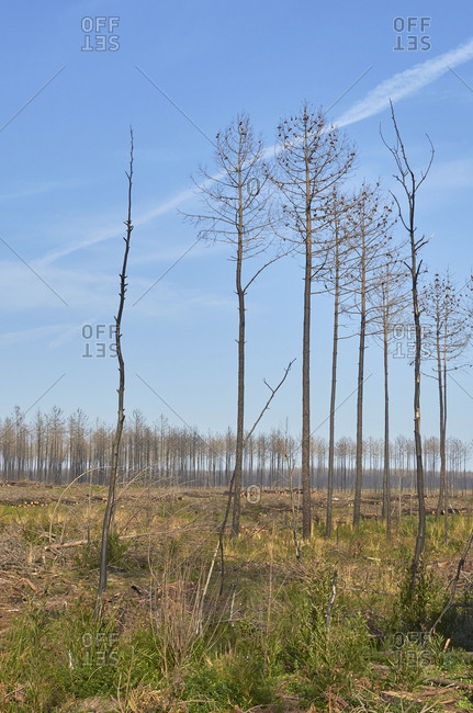 Deforestation by logging industry in a pine forest in Portugal