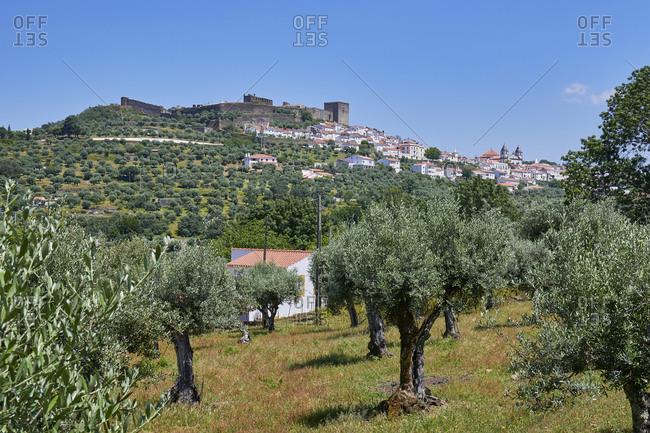 Olive grove on the edge of Castelo de Vide, Alentejo, Portugal