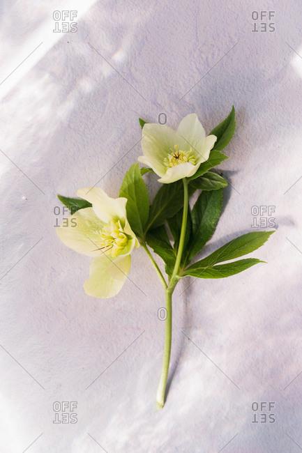 Spring flowers against dappled light on wall