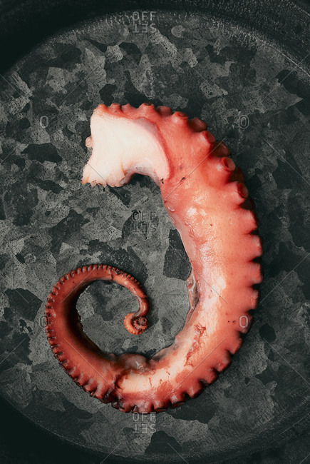 A piece of a boiled octopus