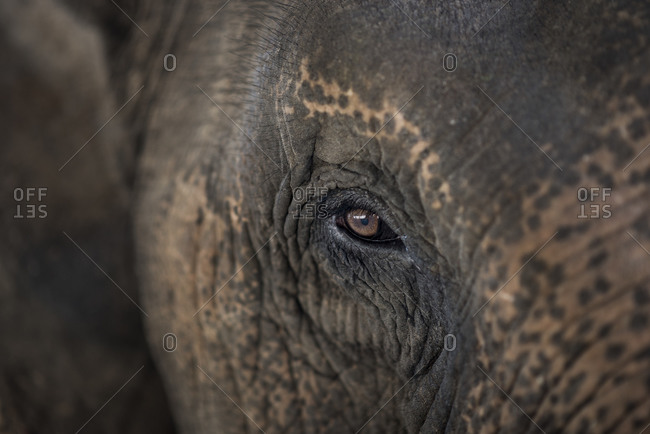 Close up of an Asian elephant's head, Pai, Northern Thailand.