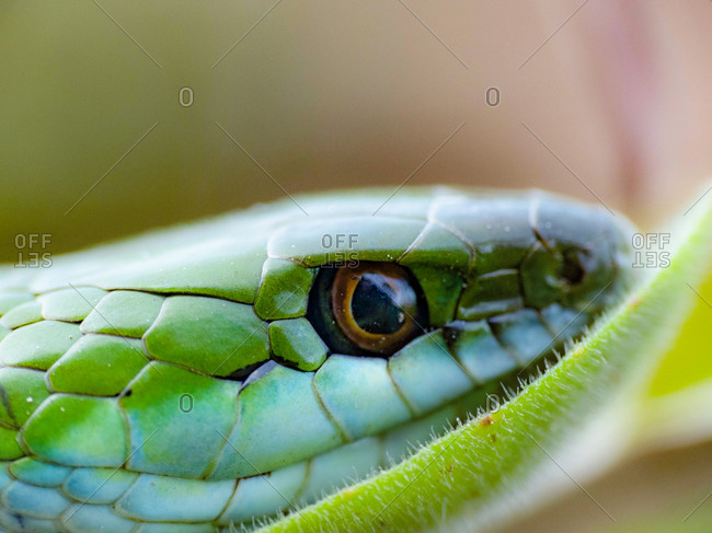 Snake resting on green leaf