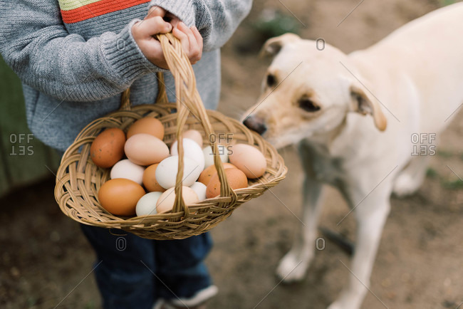 Little boy holding a basket of farm fresh eggs and his curious dog.