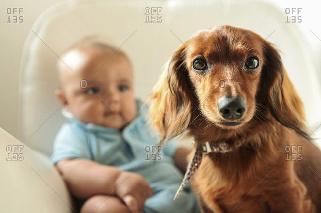 Baby boy and cute teckel dog in bedroom