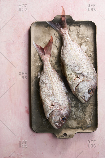 Fresh Raw pink snapper Fish on ice and metal tray