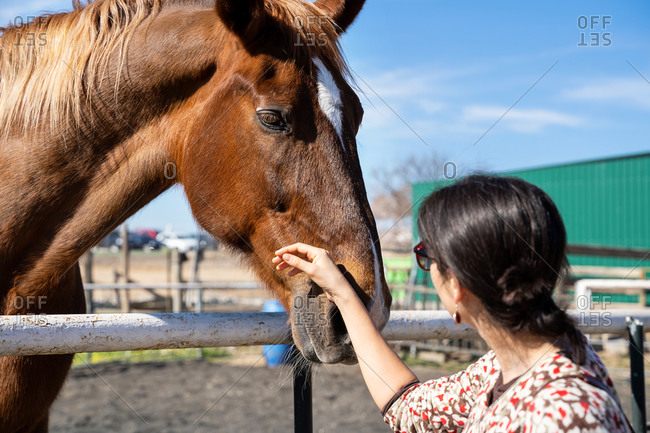 Woman in casual wear standing on sandy arena near fence and caressing chestnut horse