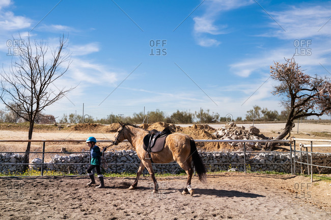 Side view of boy in riding hat and boot walking along paddock with dun horse during dressage lesson in equestrian school