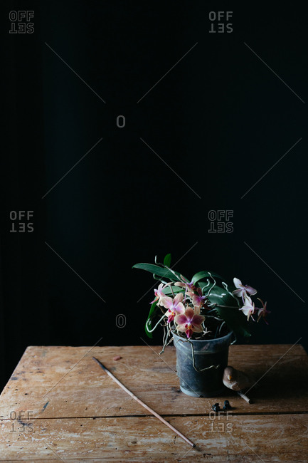 Composition of natural flowers growing in pot on shabby wooden table in dark room