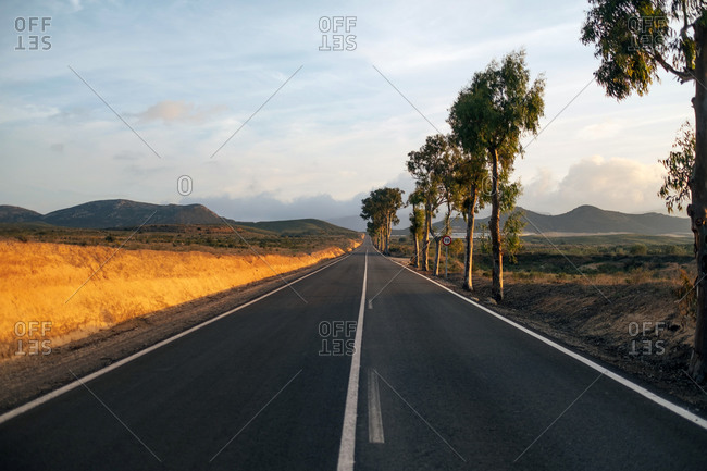 Straight asphalt road going near trees and fields through picturesque countryside on cloudy evening