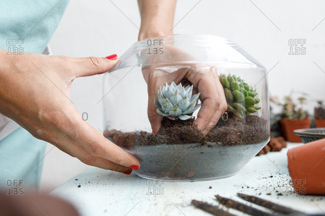 Faceless gardener standing at table and planting succulent in soil in glass flowerpot