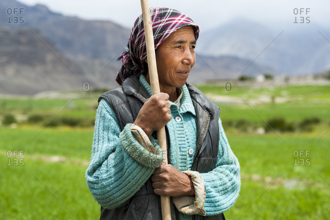 Woman works with irrigation tools to even the flow of water into the wheat field in Ladakh in India