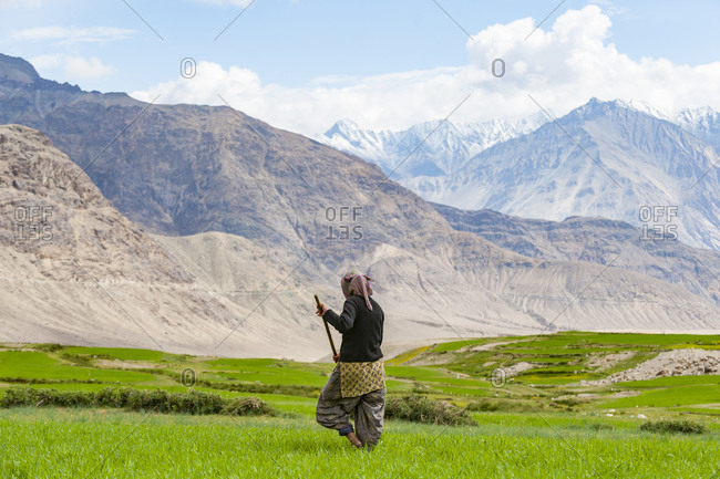 Women work with irrigation tools to even the flow of water into their wheat field in the remote region of Ladakh in India
