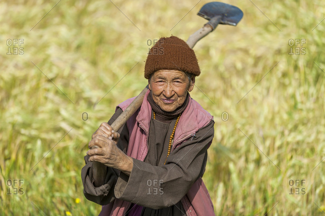 A woman working in a wheat field