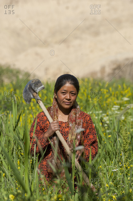 A woman working in wheat fields with the dry landscape of Ladakh
