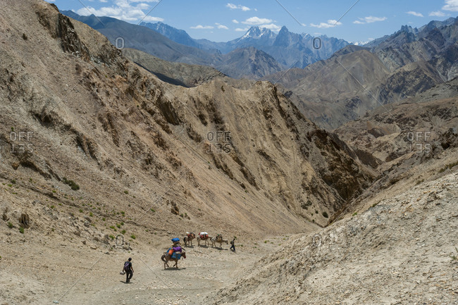 Pack horses carrying hiking equipment cross the top of the Prinkiti La along the Hidden valleys trek in Ladakh in India