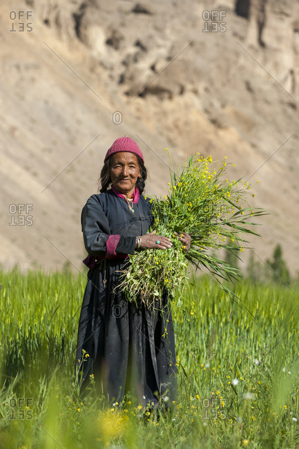 Collecting flowers which will be used to feed the animals in Ladakh