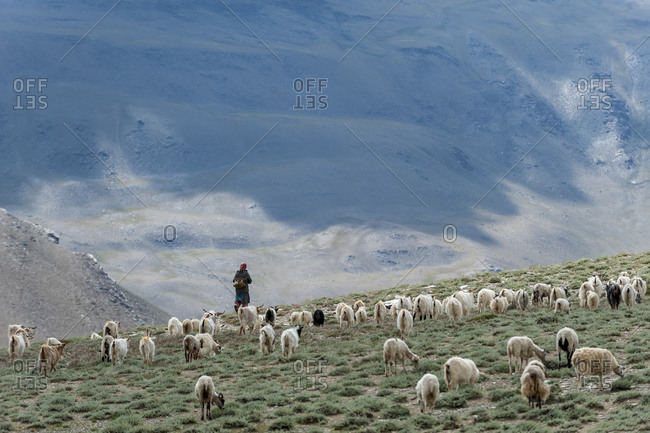 A nomad woman walks her sheep and goats into the hills to graze for the day