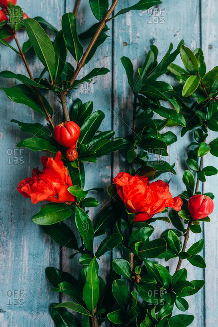 Red flowers on leafy branches