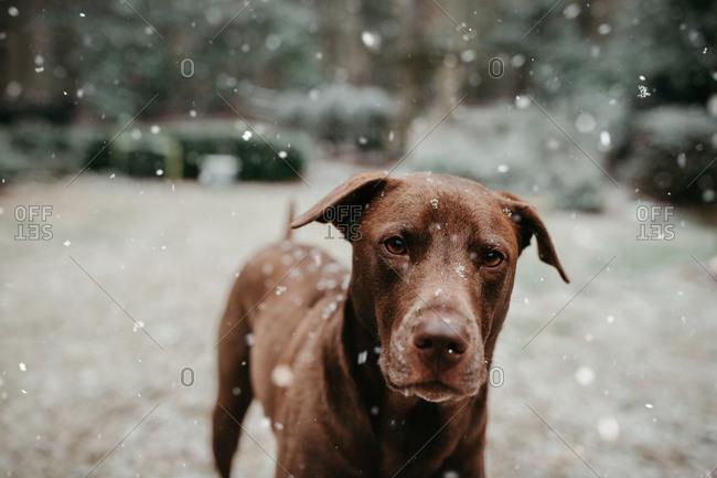 Dog enjoying the snow outside