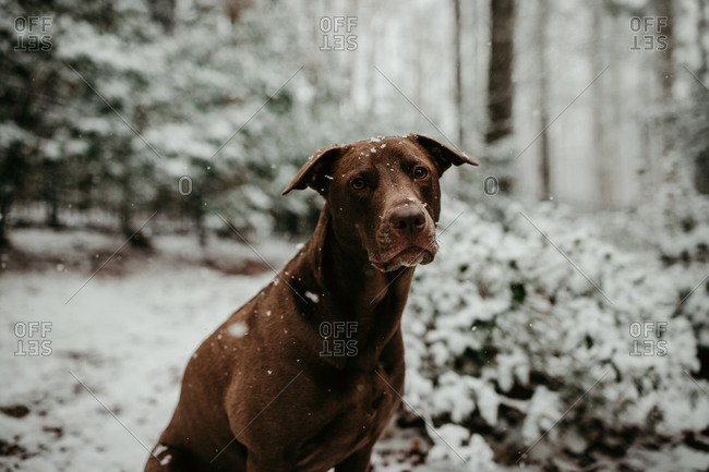 Portrait of a dog outside in the winter snow